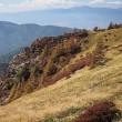 ★美ヶ原高原の秋(5)コメツツジの紅葉は地味だが魅力的 2017
