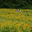 たんとう花公園のひまわり畑