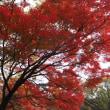 環境音楽コンセプト14-日本人と欧米人の音の感じ方の違い