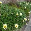 春の兆し<お散歩花ウォッチング>