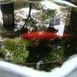 大きな金魚のお昼寝タイム   東京  恵比寿