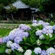 紫陽花と弁天堂