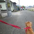 ロング散歩