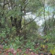 タヌキ川に捨てる