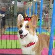 【カウンセリング】&【一日体験幼稚園】受付中です(*^-^*) 犬のしつけ教室@アロハドギー