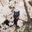 【art】「五十嵐健太 飛び猫写真展」@オリナス