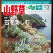 山野草とミニ盆栽 夏号が出ています。