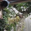 9月<12>ハヤト瓜・丘わかめの花と鳩の巣