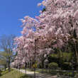 その3 京都が懐かしい なんだか我が人生の終焉近いか懐かしい我が記事が読みたい!!
