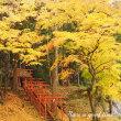 紅葉を追いかけて vol.5 (京都府・導観稲荷神社)