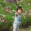 昭和記念公園 コスモス 2