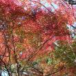 季節を感じに・・・・紅葉