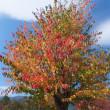 秋の風景~塩嶺と荒神山~