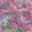 春を待ったね~~早春の花が咲いて来ました(^^♪(^^♪