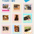 7月1日は猫の里親会★室内開催ですお間違えなく(^-^)