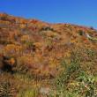 立山から紅葉のタンボ平歩く
