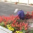 花壇も冬支度をしました。