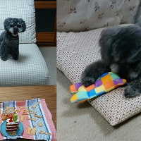 昨日は我が家の愛犬「シェル」の16才の誕生日