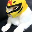 2月16日(土)のつぶやき ニャるほど!(ФωФ)白猫は基本、ニャんの色でも合うんでしょうかニャ?