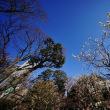 小石川後楽園の梅まつり 後編(超広角10ミリレンズで撮影)