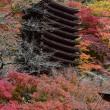 2018/11/20 多武峰と甘樫の丘