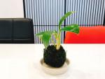 「ナチュラルキッチン」で買った 小さな植物