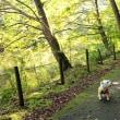 白鷺~おしどりが居たっ!!自然公園~