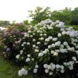 「花菖蒲」「紫陽花」などが綺麗な大野湊緑地公園。