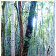 登山道の風景 竹林①