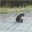 【地域猫活動】Tの前に/地域承認