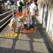 ラブちゃん(ラブ&DJちゃん)