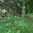 「ウバユリ」の開花工程