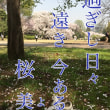 桜・さくら・サクラ