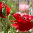 「花フェスタ記念公園」のバラを再び