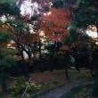 東京に思えない  秋の麟祥院  春日局