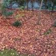 しっとり、、静かな大人の紅葉狩り
