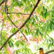 一期一会・・・鳥撮りの記  238 紅葉とカワセミ
