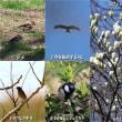 4日ぶりの鳥見