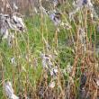 冬の草たち