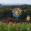コスモス畑で~神戸総合運動公園~
