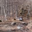 春先の林道は落石が多い