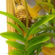 正体不明な植物の話。