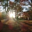 奈良公園と周辺散策♪