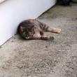 イタリアで出合ったツンデレ猫(笑)
