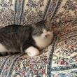 今日の猫とご質問におこたえしてと。