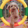週末の【ALOHA塾】は未病ケアの《Dogscan》♫  犬のしつけ教室&犬の幼稚園@アロハドギー