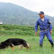 警察犬の出動、7割以上が行方不明者の捜索