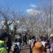 ウォーキング例会「JR筑前前原~JR波多江駅」(福岡県糸島市)