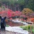 2017 11月12日の環境芸術の森
