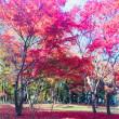 調布・神代植物公園(紅葉)